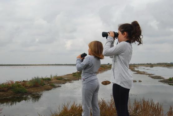 Λιμνοθάλασσα Καλοχωρίου Birdwatching